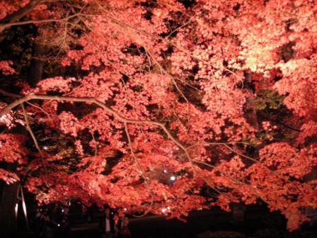 20091206 大田黒1.JPG